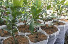 rayson nonwoven,ruixin,enviro-Nonwoven PP Vegetable Blanket-1
