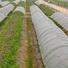 Quality weed control landscape fabric rayson nonwoven,ruixin,enviro Brand season biodegradable landscape fabric
