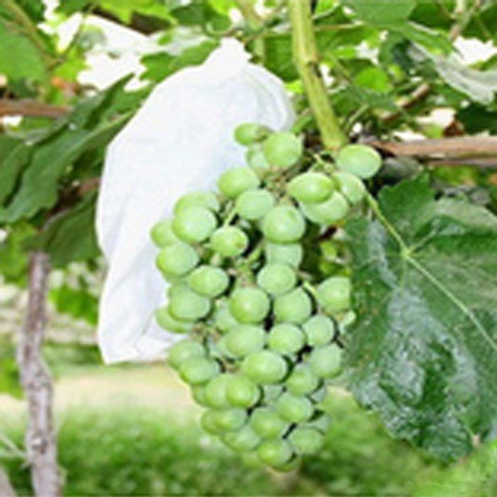Biologisch abbaubare Spunbond Vliesstoff Obst Schutztasche für Traube