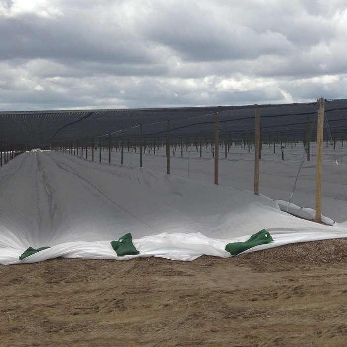 Agriculture tunnel pp non woven farbic with Uv resistant