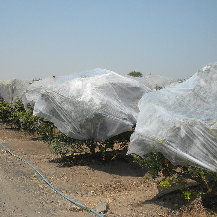 Non Woven PP Tree Covering Bags