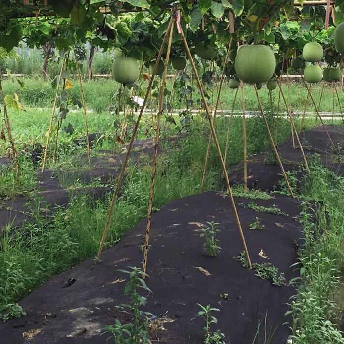 Tapis de contrôle contre les mauvaises herbes biodégradable spunbond non tissé avec 3 % des rayons UV