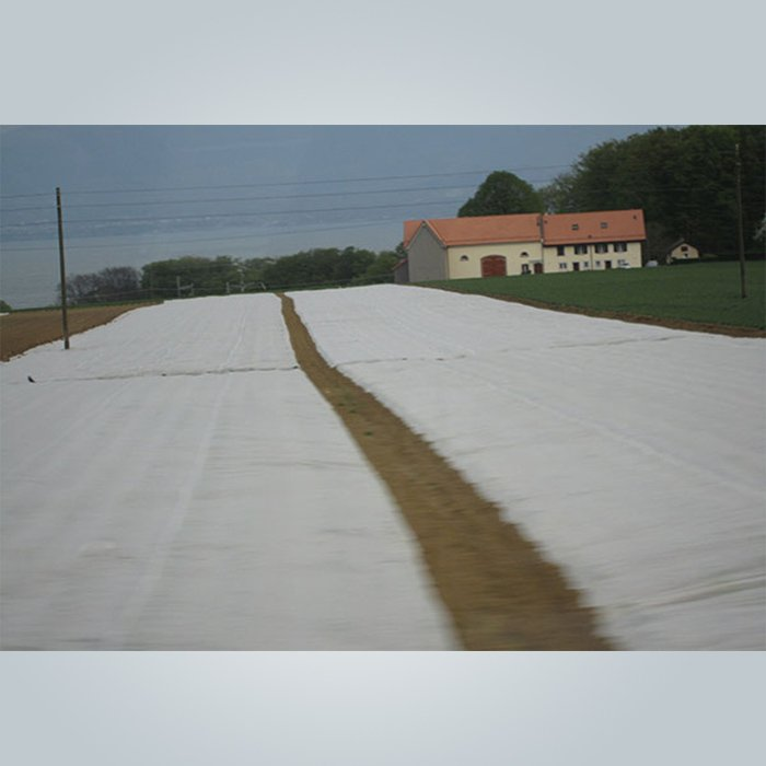 UV-behandeltes PP-Vlies-Anti-Frost-Vlies