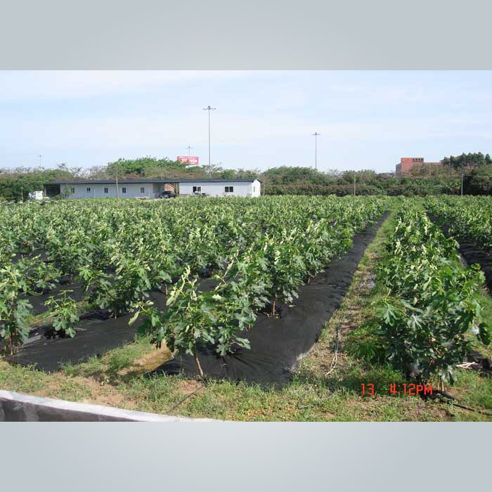 Tissu de lutte contre les mauvaises herbes non tissé non tissé pour l'agriculture