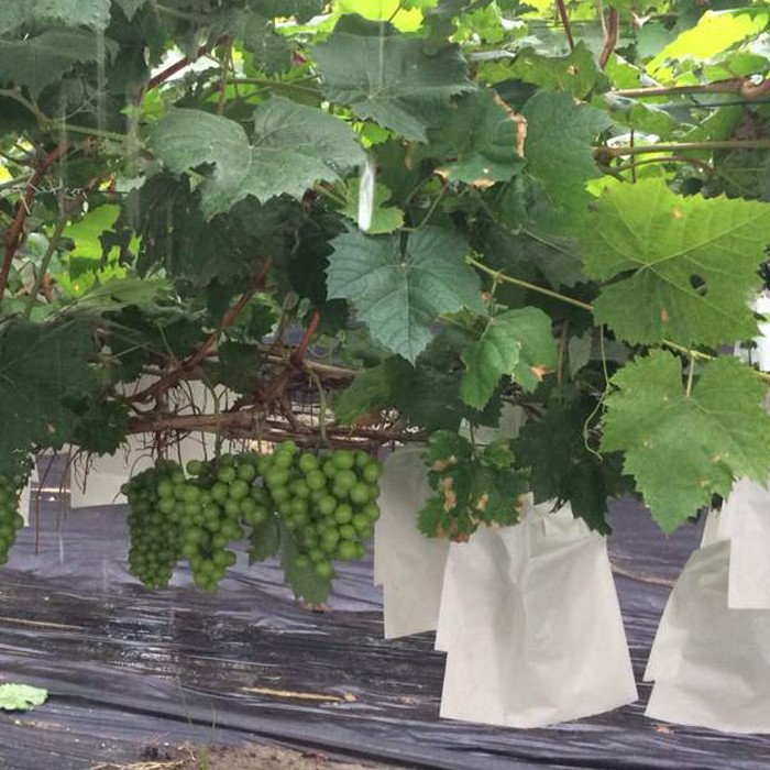 Agriculture nonwoven fabric for winter protection of plants against frost and water loss
