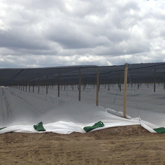 Tissu non-tissé Spunbonded de l'agriculture PP pour la pépinière pendant l'hivernage