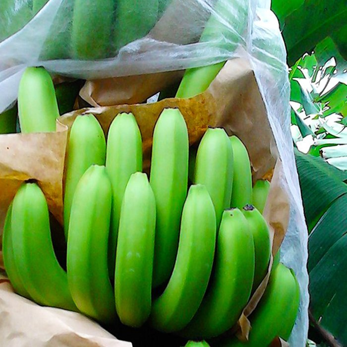 Weight 17 gsm Banana Bags Use PP Nonwoven Anti UV Fabric