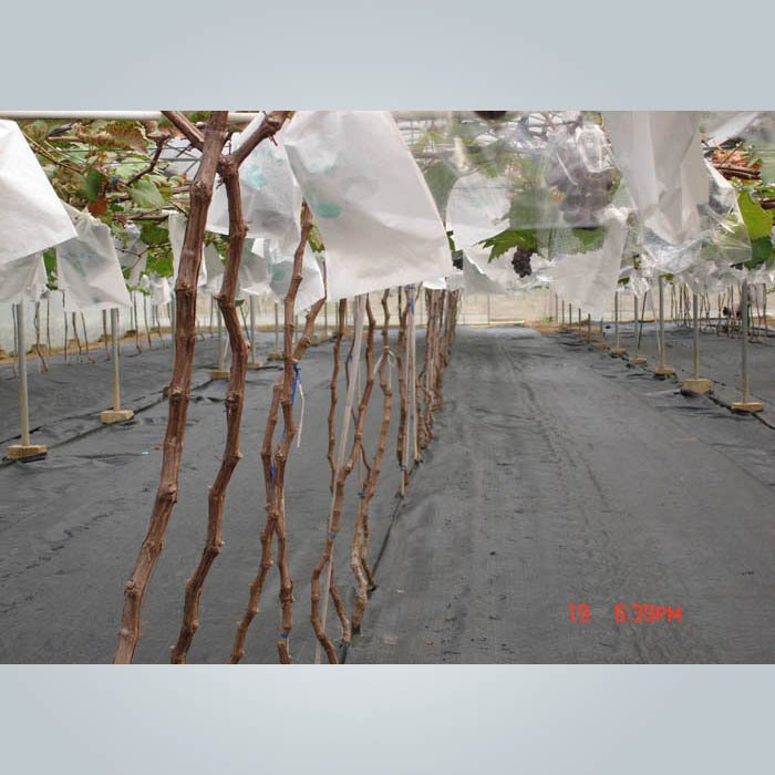 ガーデンフリースの雑草のコントロールの地面のカバー50gsm