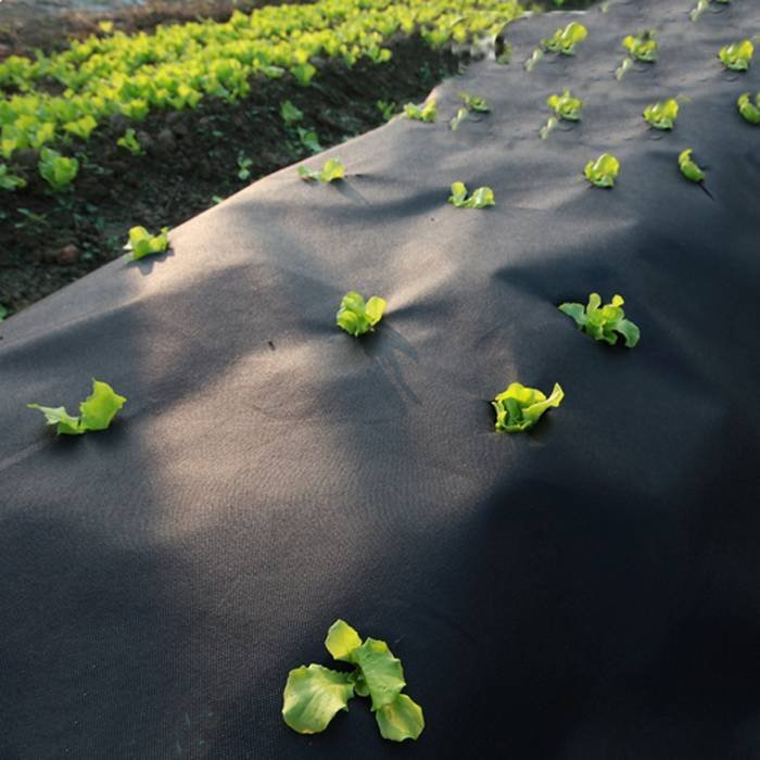 Black Air Permearble PP Nonwoven Fabric Agriculture Cover / Ground Protection Mat