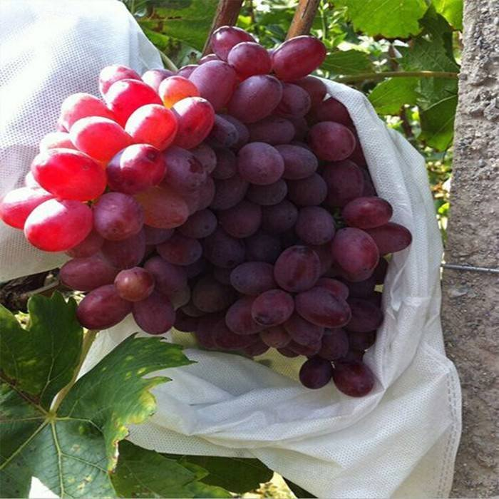Anti-UV Grape / Banana  Protection Bags
