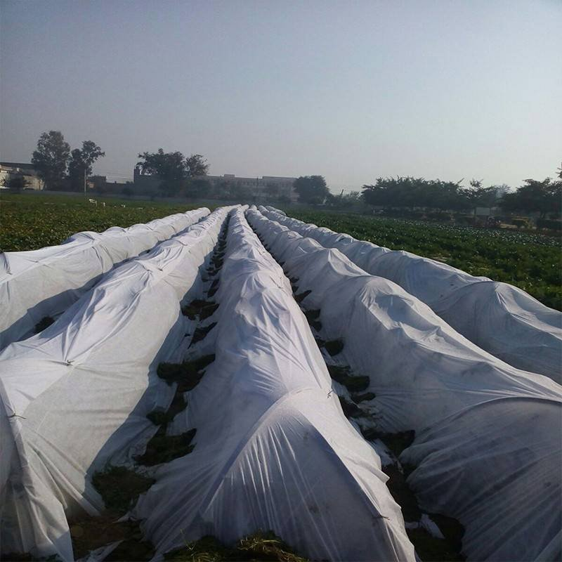Agricultural Non Woven PP Tunnel Cover