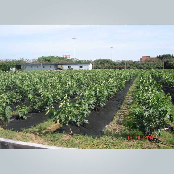 3% protección UV PPSB malezas barrera de tela para jardín
