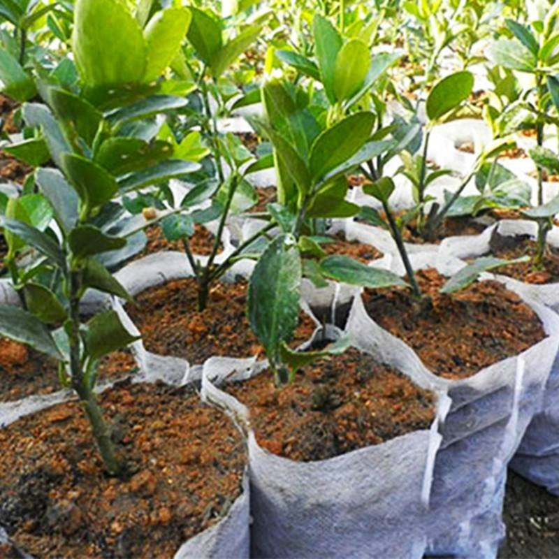 Vaso per piante in tessuto non agricolo Agricultral