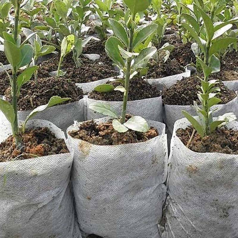 Agricultural Non Woven PP Planting Bags