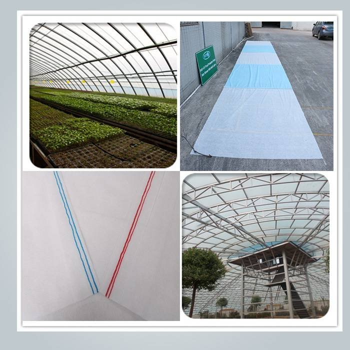 Spunbond non woven UV treated crop row cover
