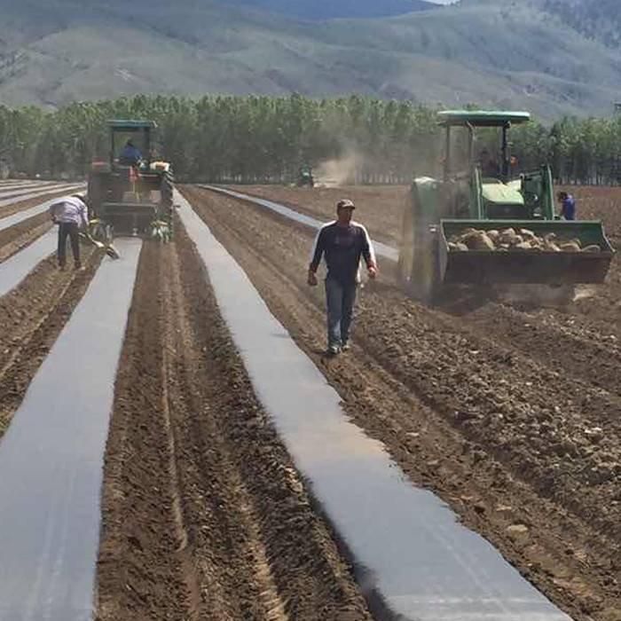 مصنع الزراعة ب سبونبوند غير المنسوجة النسيج / ب محبوكة القماش
