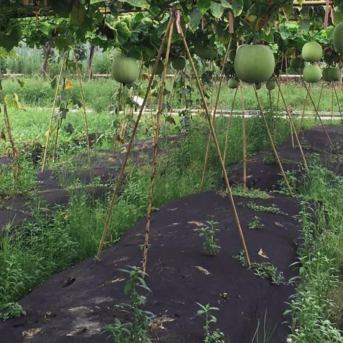 agricoltura 100% poliestere tessuto non tessuto poliestere per il controllo delle infestanti