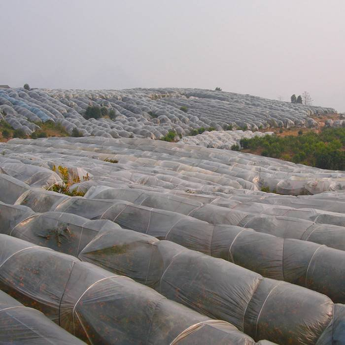 Supply UV3% agriculture 100% polypropylene nonwoven fabric for plant mothproof and coves