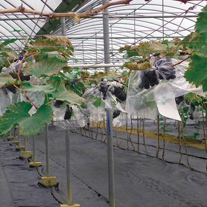 50/6070 جرام 1.22 متر * 50 متر الأسود المشهد الزراعة النسيج ب سبونبوندد منسوجات النسيج