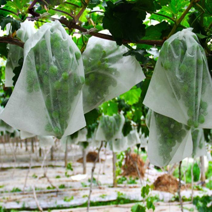 Light Weight Grape Cover Bags Use PP Nonwoven Anti Aging Fabric