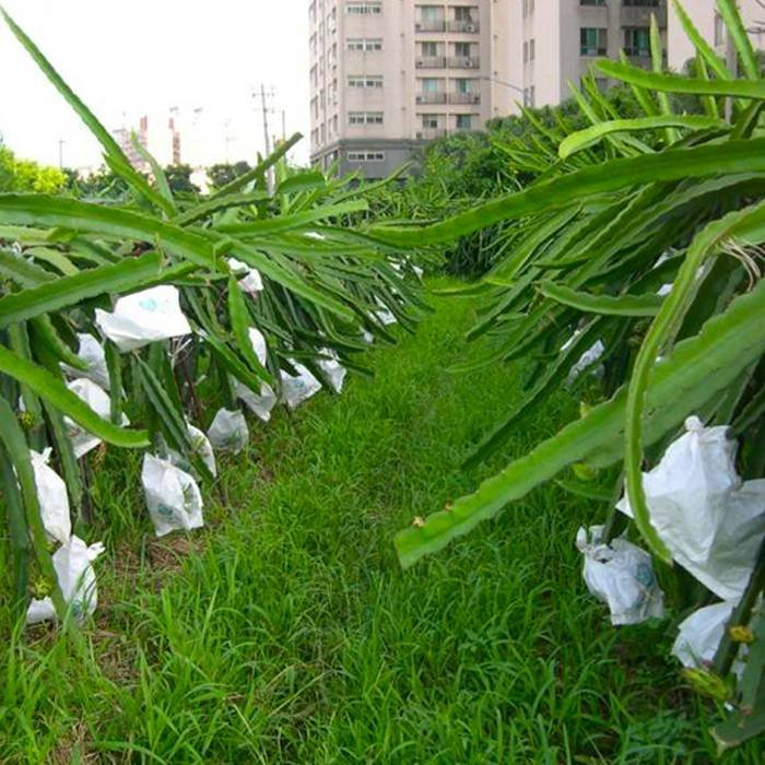 Anti Aging UV Protected Nonwoven Bags For Agriculture Use