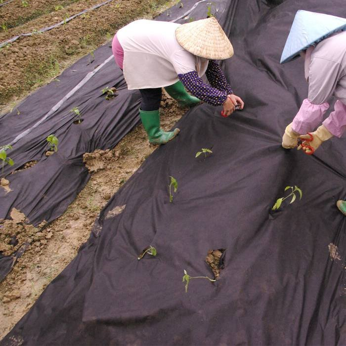 Raw PP Material Weed Control Mats With Anti Ages For Landscaping