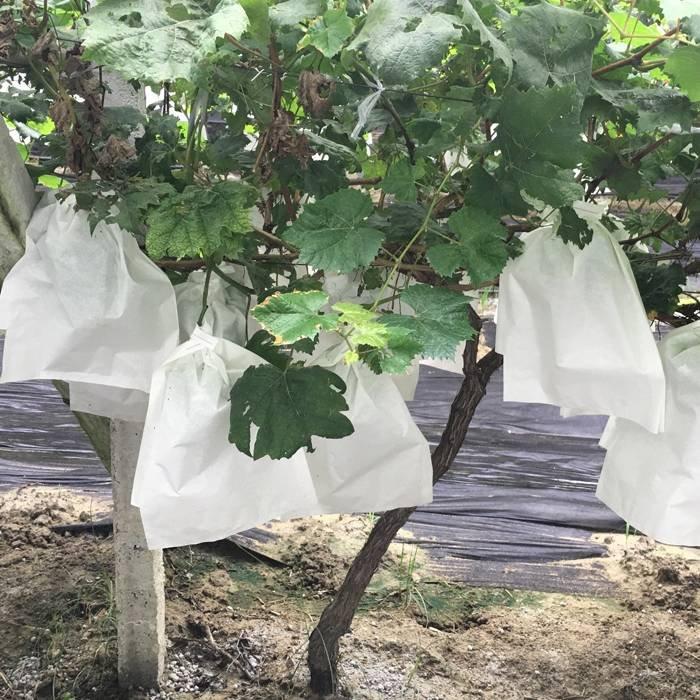 백색 비 길쌈 식물 덮개