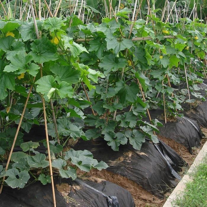 Tapis de contrôle des mauvaises herbes PP anti UV agricole