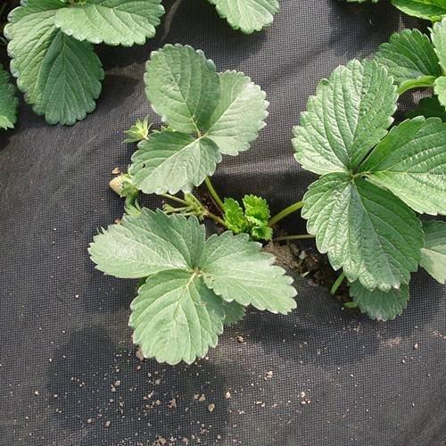 Nonwoven Horticultral Unkrautbekämpfungsmatte