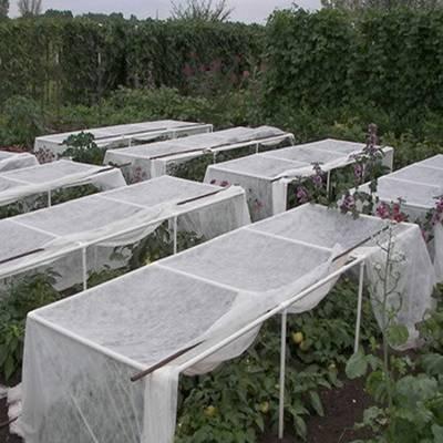 Nonwoven Crop Blanket